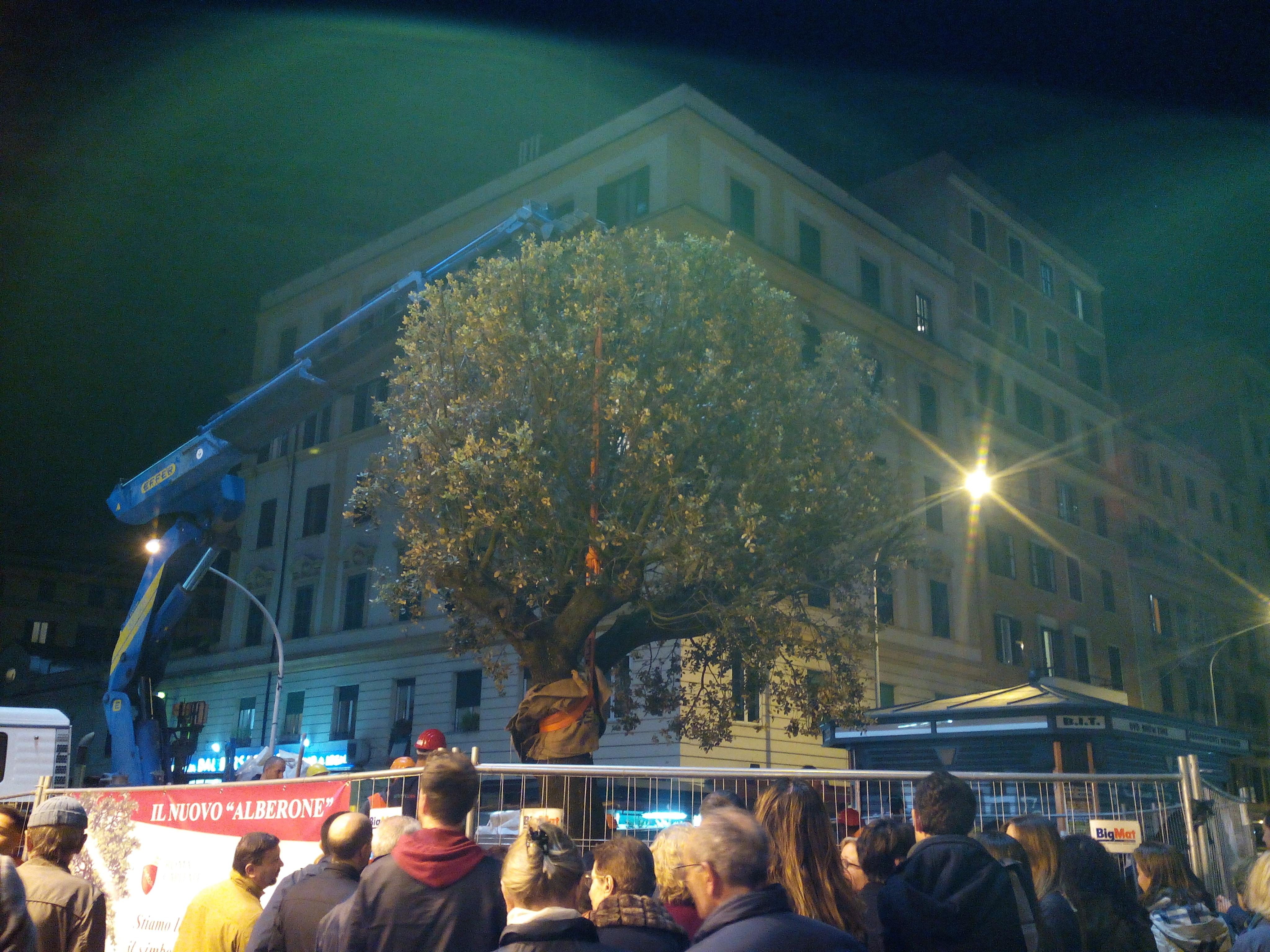 19 Novembre 2014 - Arrivo del nuovo Alberone